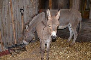 De drie weken oude Gossie met zijn moeder Rosie.(Foto: Paul Spapens)