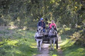 Kinderen rijden mee met Frans van Alphen. Op het Helfortpaadje hadden zij de nostalgische ervaring hoe het vroeger was om met paard en wagen over een hobbelig zandweggetje te rijden.(Foto: Paul Spapens)