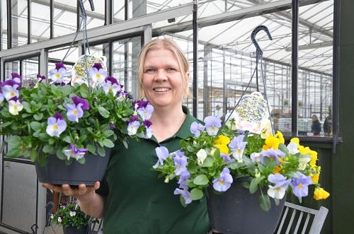 Mylène van de Ven van kwekerij Van de Ven met violen in hangpotten zoals die komende zaterdag door WieKentKunst worden verkocht. (Foto: Hennie van Schooten)