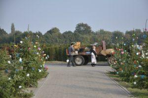 Een schitterende boerenovertrek passeert de roosjes van een gouden bruiloft bij Kees van Dijk aan de Oostelvoortjes.(Foto: Paul Spapens)